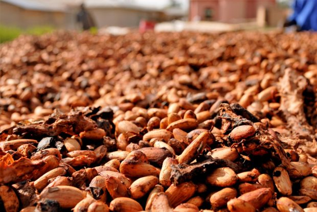 cocoa-beans-2926207_1280