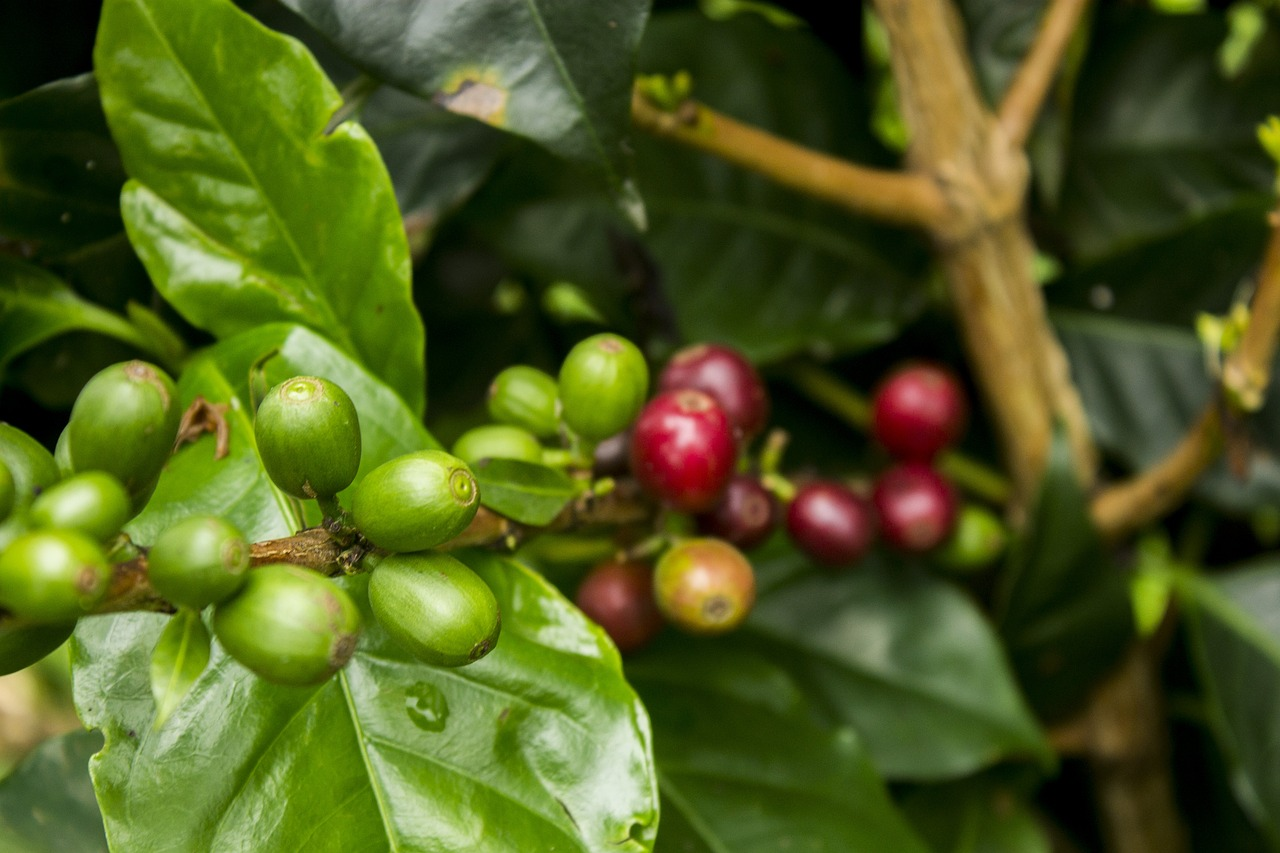 coffee water agriculture