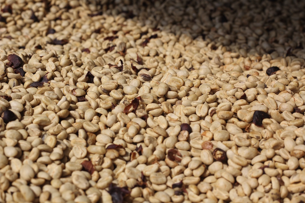 coffee_drying